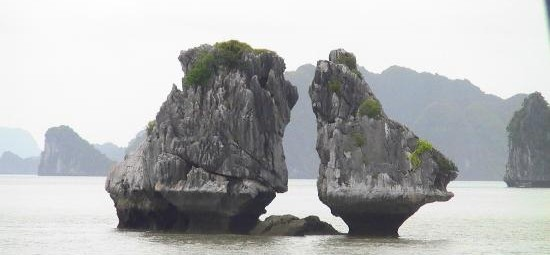 halong-bay-cock-fighting.jpg